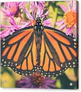 Grace And Beauty Acrylic Print