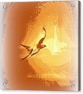 Mississippi Kite - Beauty Into The Light Acrylic Print