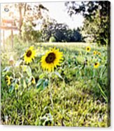 Grace Plantation Acrylic Print