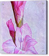 Grace With Textures Acrylic Print