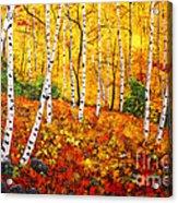 Graceful Birch Trees Acrylic Print by Connie Tom
