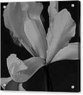 Graceful In Monochrome  Acrylic Print
