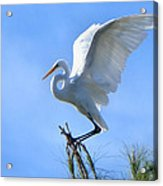 Graceful Landing Acrylic Print