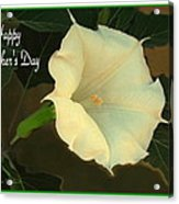 Graceful Moonflower - Happy Mother's Day Acrylic Print
