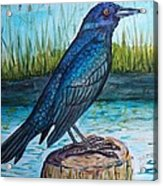 Grackle By The Water Acrylic Print