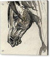 Grafik Polish Arabian Horse Ink Drawing Acrylic Print