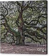 Grand Angel Oak Tree Acrylic Print
