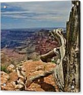 Grand Canyon And Dead Tree 1 Acrylic Print