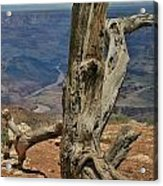 Grand Canyon And Dead Tree 2  Acrylic Print