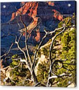 Grand Canyon Branches Acrylic Print