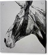 Grand Canyon Mule Acrylic Print