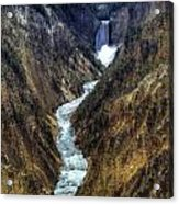 Grand Canyon Of Yellowstone - From Artist Point Acrylic Print