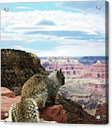 Grand Canyon Squirrel Acrylic Print
