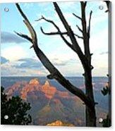 Grand Canyon Tree Acrylic Print