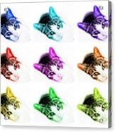 Grand Kitty Cuteness 3 Pop Art 9 Acrylic Print