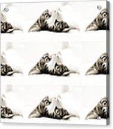 Grand Kitty Cuteness Bw 9 Acrylic Print