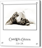 Grand Kitty Cuteness Miss Tilly Poster Acrylic Print by Andee Design