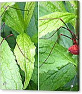 Granddaddy Spider In 3d Stereo Acrylic Print