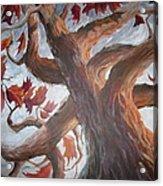 Grandeur Of Tree Acrylic Print