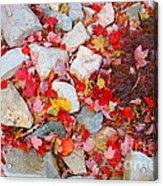 Granite Rocks Among Maple Leaves Acrylic Print