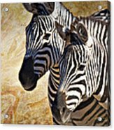 Grant's Zebras_b1 Acrylic Print