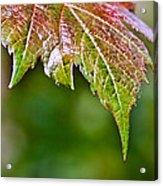 Grape Autumn Leaf Acrylic Print