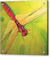 Grapeleaf Dragonfly Acrylic Print