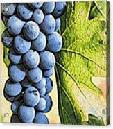 Grapes 2 Acrylic Print