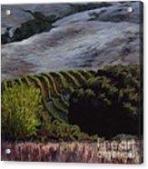 Grapes And Oaks Acrylic Print