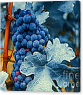 Grapes - Blue  Acrylic Print by Hannes Cmarits