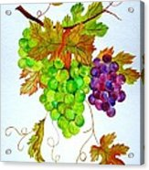 Grapes Acrylic Print by Elena Mahoney