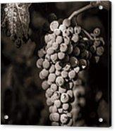 Grapes In Grey 4 Acrylic Print