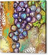Grapes In The Vineyard  Acrylic Print