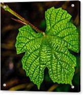 Grapes Of Rath Acrylic Print by Louis Dallara
