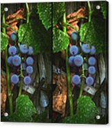 Grapes On The Vine - Gently Cross Your Eyes And Focus On The Middle Image Acrylic Print