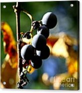 Grapes On The Vine In Square  Acrylic Print by Neal Eslinger