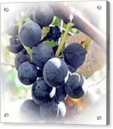 Grapes On The Vine Acrylic Print by Kathleen Struckle