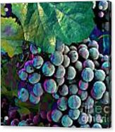 Grapes Painterly Acrylic Print