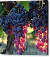 Grapes With Bokeh Acrylic Print
