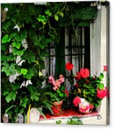 Grapevines And Geraniums Around A Window Acrylic Print