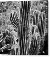 Graphic Cactus Acrylic Print