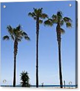 Graphic Image Of Palm Trees Blue Sky At Seaside Acrylic Print