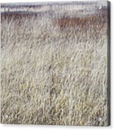Grass Abstract Acrylic Print