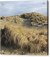 Grass And Sand Dunes Acrylic Print