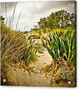 Grass And Sand Of Elafonisi Acrylic Print
