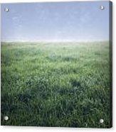 Grass And Sky  Acrylic Print