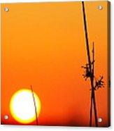Grass At Sunset 2am-13695 Acrylic Print