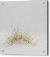 Grass Covered By White Sand Acrylic Print