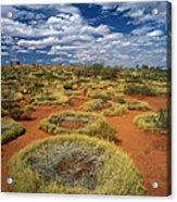 Grass Covering Sand Dunes Acrylic Print