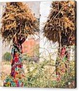 Grass Cuttings Acrylic Print